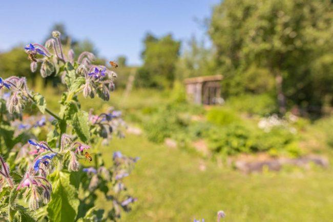 Les Ateliers de Jardinage en Permaculture