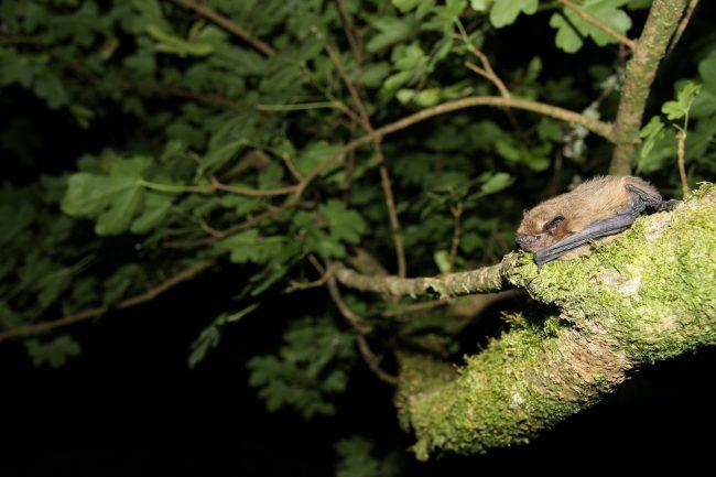 24 h de la biodiversité à La Roche-sur-Yon : sortie chauve-souris