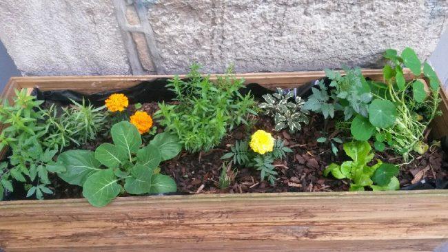 Végétalisation sur la place Antoine Vollon