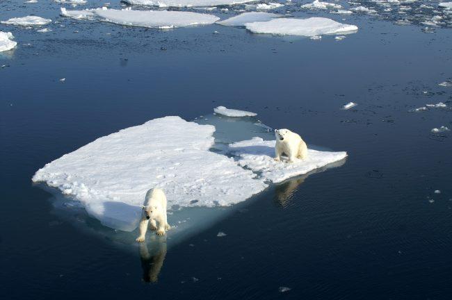 Réchauffement climatique : Comprendre et Agir