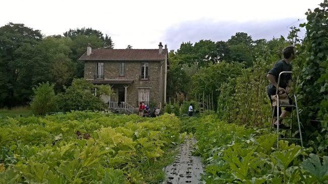 Accueil et vente de légumes frais, sains et locaux chez V'île Fertile