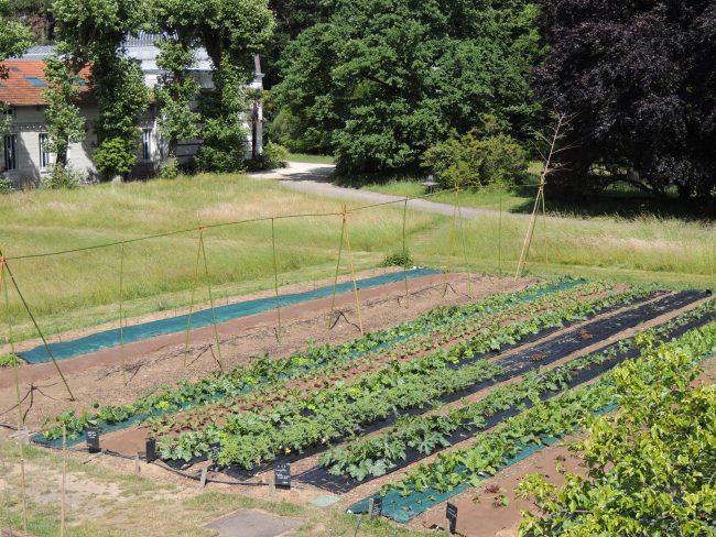 Atelier enfant : La vie d'une plante maraichère