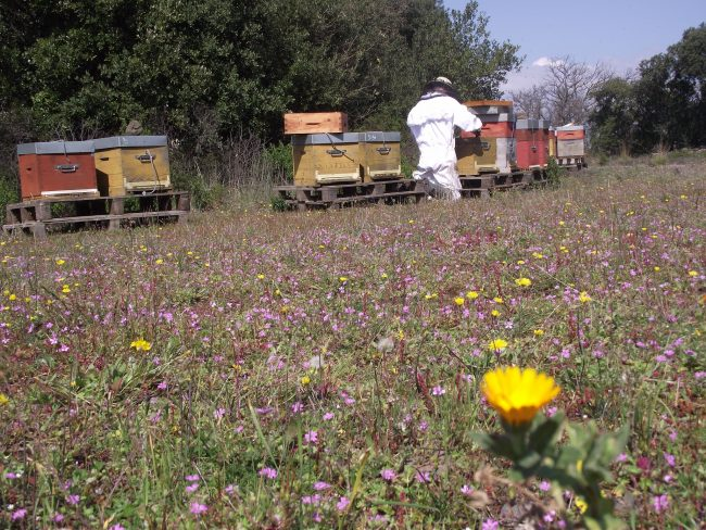 Visite de la miellerie L'Arc en Miel, rencontre avec un apiculteur professionnel passionné