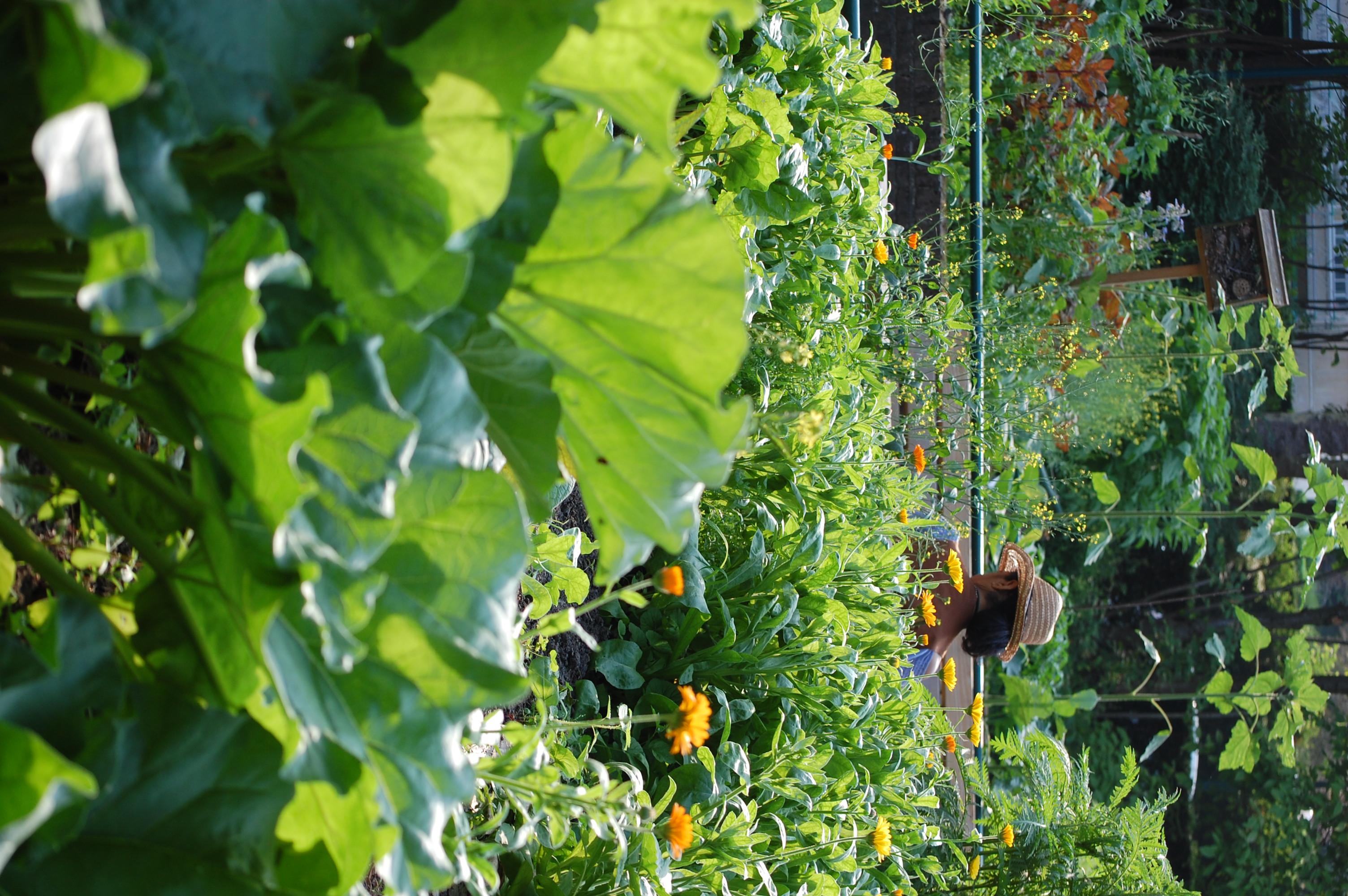 Portes ouvertes des compost et potager collectif du Moulin à Légumes