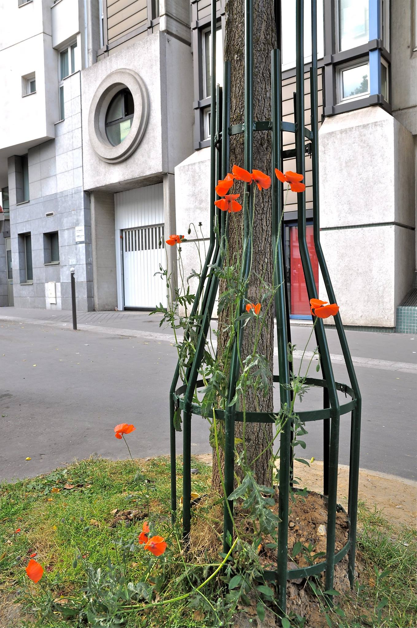 Les plantes vagabondes de l'asphalte du 20e, exposition photos