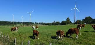 Venez découvrir les initiatives en transition de l'Est de la Belgique