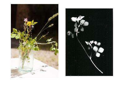 Atelier Photogrammes et Anthotypes