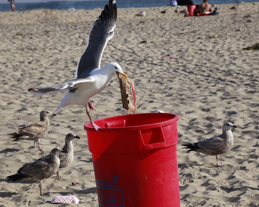 Opération ramassage de déchets
