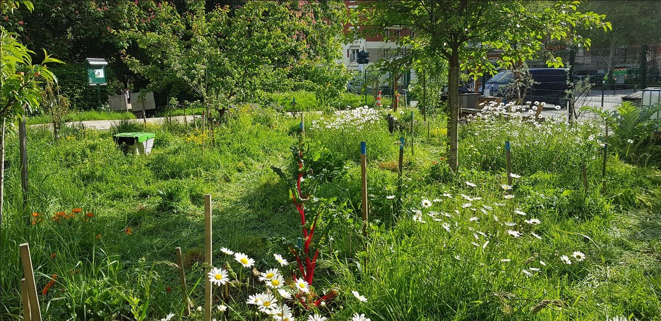 Visite et jardinage à la forêt fruitière