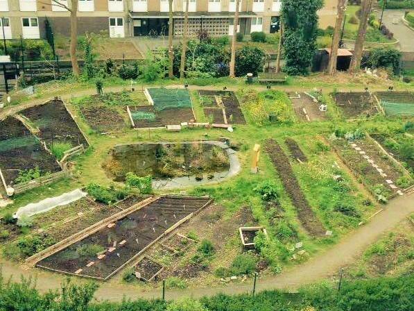 réunion d'information sur la collaboration dans un jardin collectif