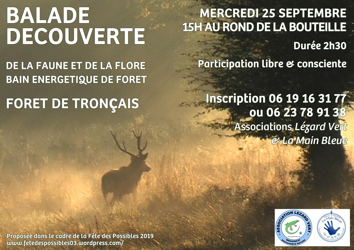 Balade découverte forêt de Tronçais