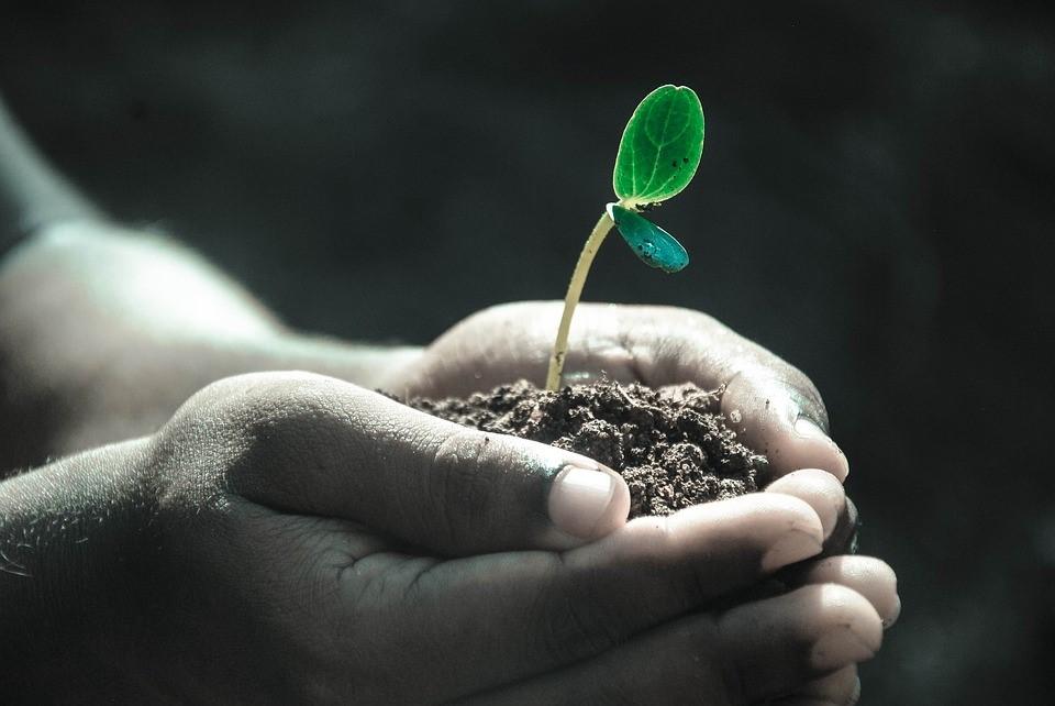 Café Transition : Sauvons le compost de la poubelle !
