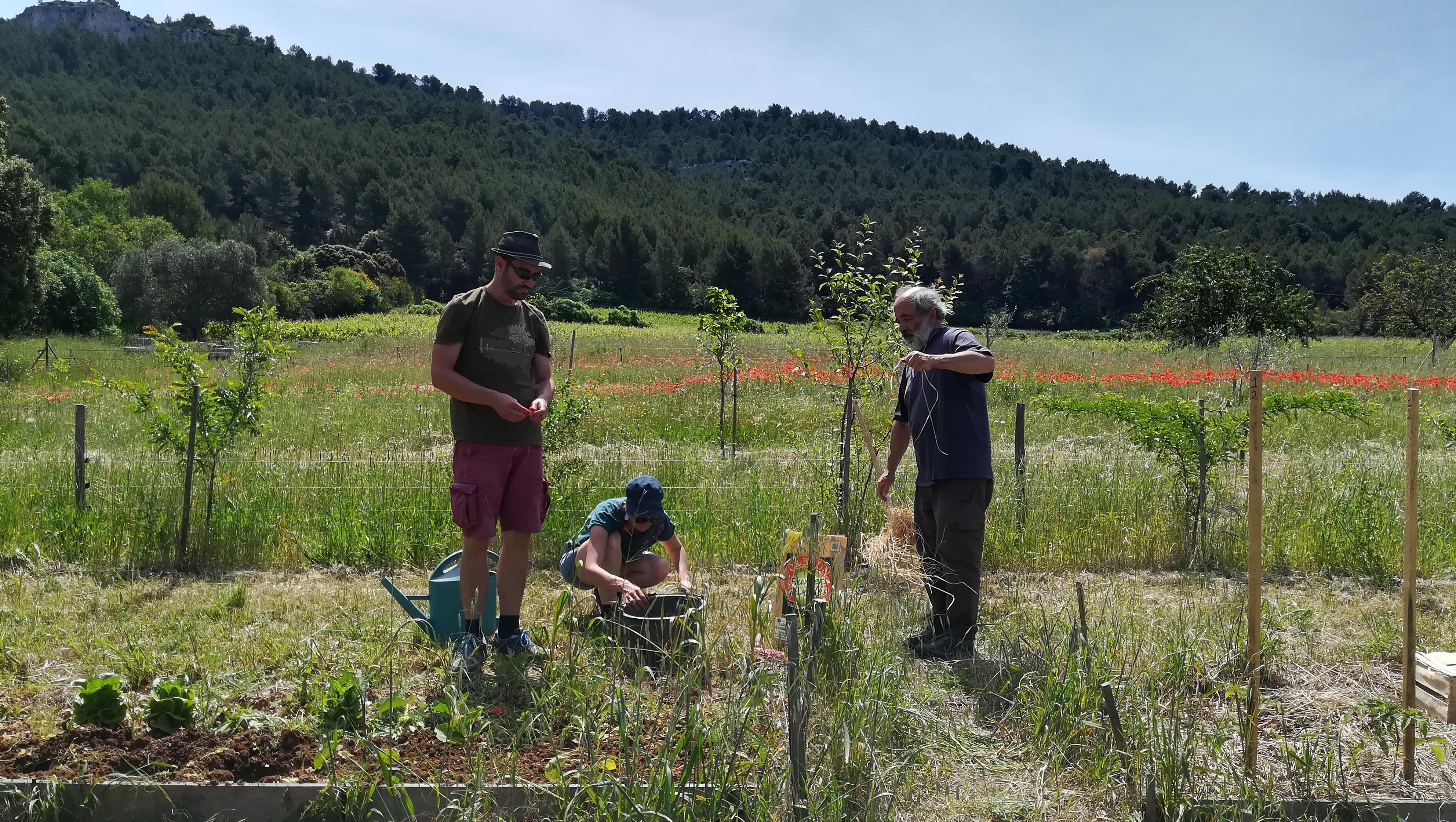 Visite du jardin collectif du Chêne Vert
