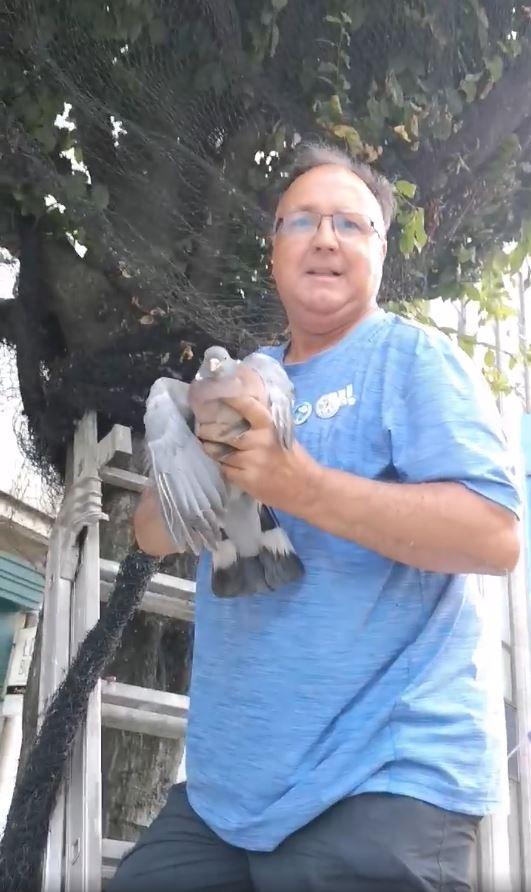 Libérez les oiseaux !
